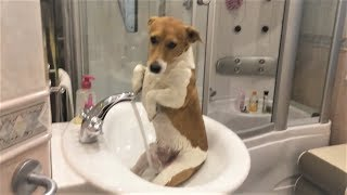 Приколы про собак 2017 Ну очень Смешные собаки  Приколы с собаками  Собаки Funny Dogs 2017 犬 犬について