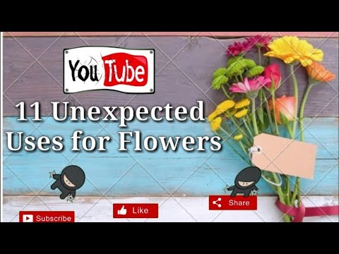 , title : 'Top 11 unexpected uses of Flowers