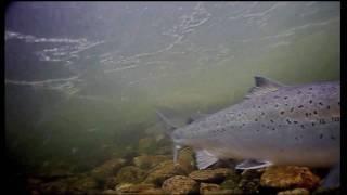Рыбалка на реке рында мурманская область