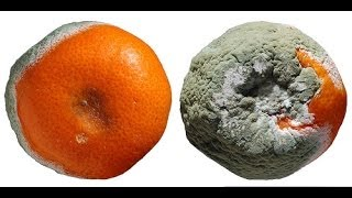 How To Get Rid Of Rotten Oranges (the fun way)