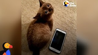 Blind Mini Cat Gives Her Mom Kisses - MILI   The Dodo