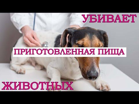 Только ДОМАШНИЕ животные (НЕ СЫРОЕДЫ) болеют ЧЕЛОВЕЧЕСКИМИ болезнями / Фролов Ю.А.