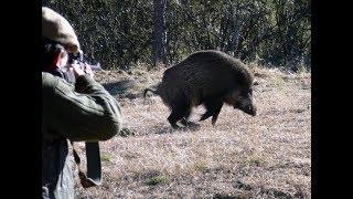 Wild Boar Hunting Compilation,Chasse Sanglier,Wildschweinjagd