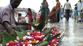 Flowers in Haridwar, Uttarakhand