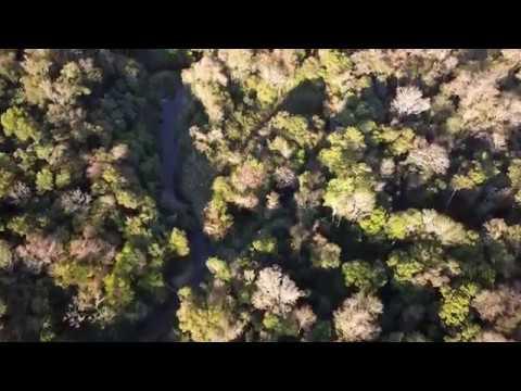 Restauración Forestal en el Bosque Atlántico del Alto Paraná . (Paraguay oct/2018)