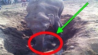 Elefante Cava Hueco Por 11 Horas, Y Lo Que Sacó... 😲