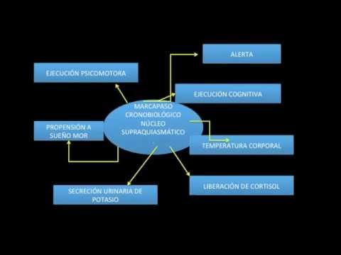 Las medidas de prevención de la enfermedad hipertensiva