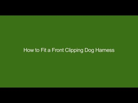 How To Fit A Front Clipping Dog Harness
