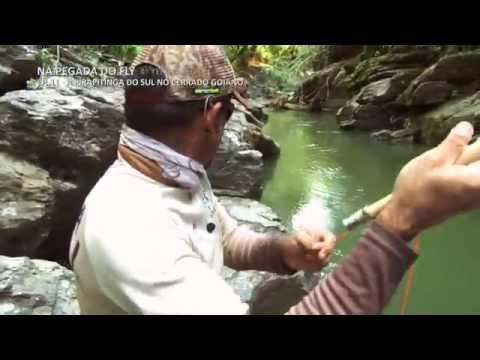 Pirapitinga do Sul no Cerrado Goiano