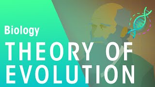The Theory of Evolution by  Natural Selection | Evolution | Biology | FuseSchool