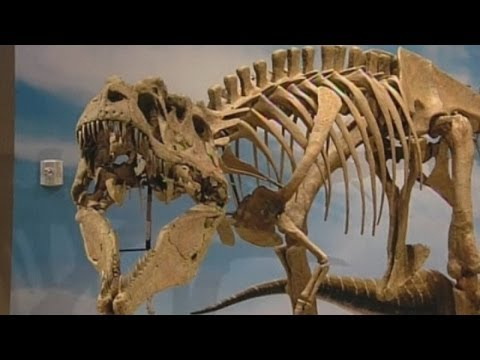 Ferocius dinosaur named Lythronax argestes and 'King of Gore' shown off in Utah