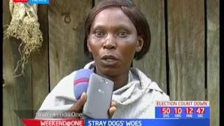 Stray dogs causing havoc in Kuresoi