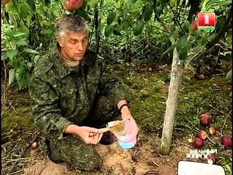 Услуги частного массажа простаты в москве