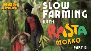 Hummingbirds & GIANT Plantains! Slow Farming with Rasta Mokko & Ratty
