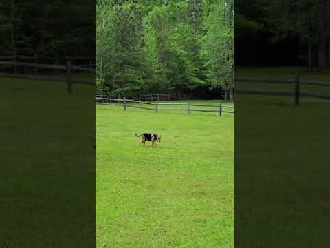 big open field for dog to play or kids