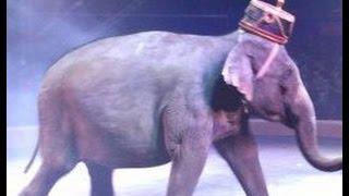 Цирк Кобзов  Италия часть 2