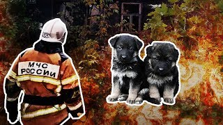 Close Call: Puppies Rescued from the Ashes