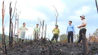 Khởi tố, điều tra vụ hủy hoại rừng ở xã Quảng Sơn, Đác Nông