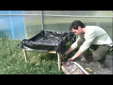 Trattamento di un fungo di consigli di unghia