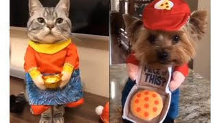 Tik Tok-Meilleures Vidéos Drôles de Chat et de Chien 🐶🐱- Best Funny DOGS et CATS #170