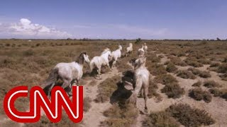 Running with France's wild horses - 360 Video