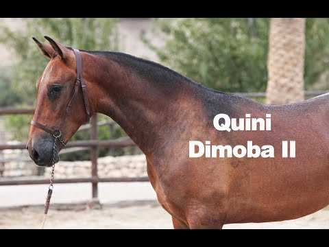 Quini DImoba II (Publicado 9-9-2018)