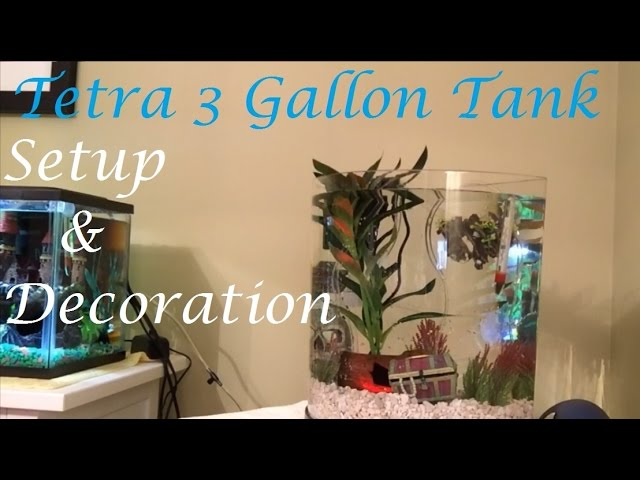 Tank Setup! | How to Set Up the Tetra 3 Gallon Halfmoon Aquarium