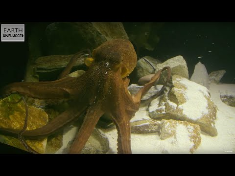 Are you afraid of the octopus? You should be! | Zoo La La (Ep. 1)