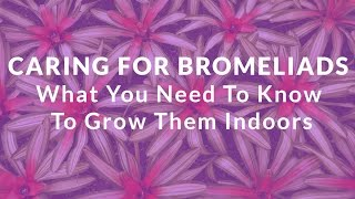Caring For Bromeliads: What You Need To Know To Grow Them Indoors