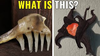 10 Bizarre Things With Weird Explanations!