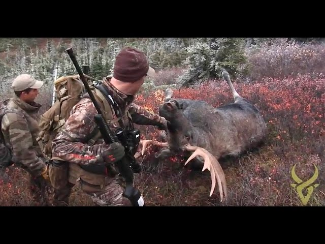 Record book Moose in BC! You won't believe the story...