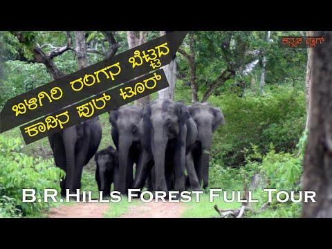 ಬಿಳಿಗಿರಿ ರಂಗನ ಬೆಟ್ಟ - BR Hills Forest Full Tour - K.Gudi - One Day Trip from Bengaluru - KannadaVlog