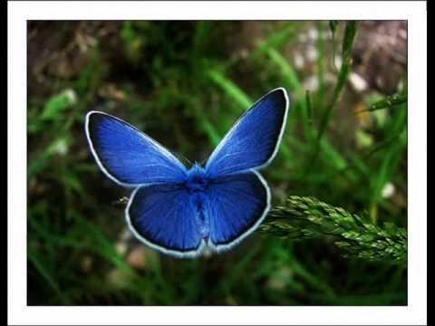 Papilloma az ember nyakán