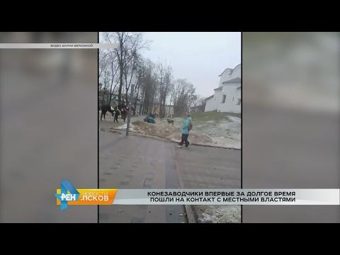 Новости Псков 02.02.2017 # Лошади в детском парке. Продолжение