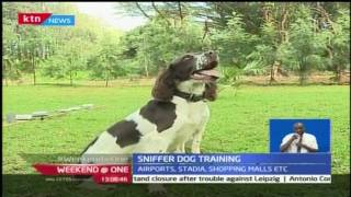 How a sniffer dog is trained to detect explosives and drugs