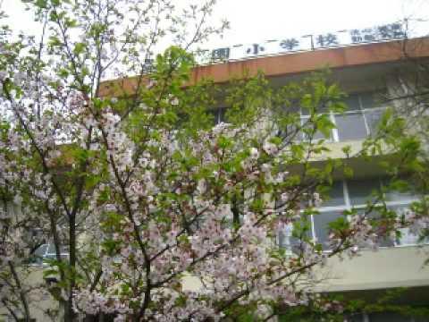 9804熊本市花園小學校日記