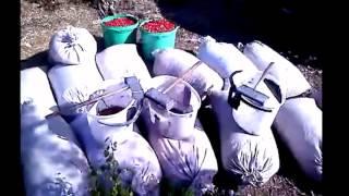 Кабачковая икра на зиму: рецепт с фото Чудо-Повар