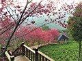 台湾の山中でみる美しき花たち~沐心泉休閒農場~