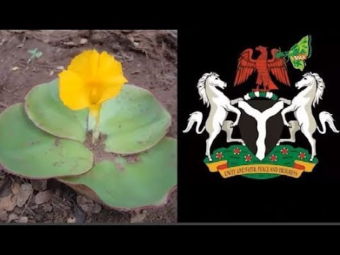 NIGERIA COAT OF ARM AND ISSUES AROUND IT _ THOMAS EMMANUEL REVEALS - GMNS