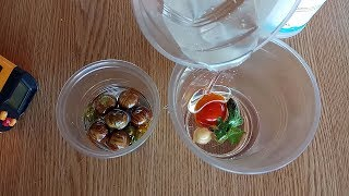 Помидор, перец и лук заливаем эпоксидной смолой
