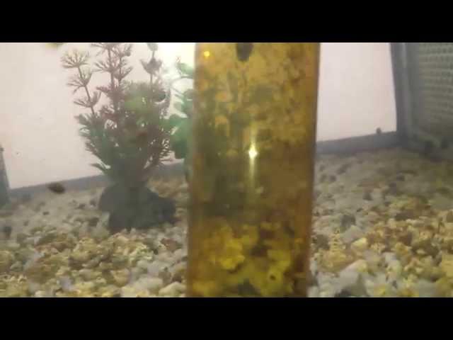 Guppy show | Il Cambio dell'acqua