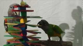 Popsicle Paradise Toy for Parrots and Parakeets