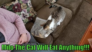 Milo The Cat Will Eat Anything!!!