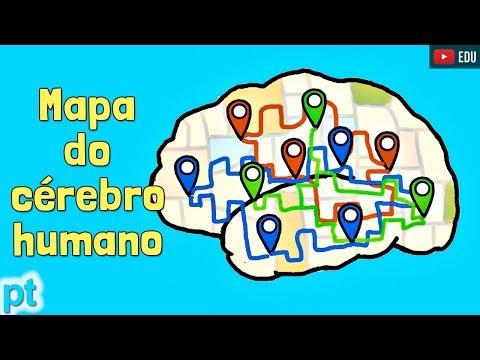 Quer saber como seu cérebro funciona? Veja isso!