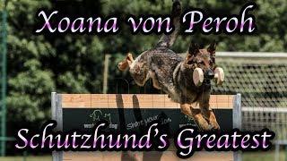 Schutzhunds Greatest Dogs *Xoana Von Peroh*