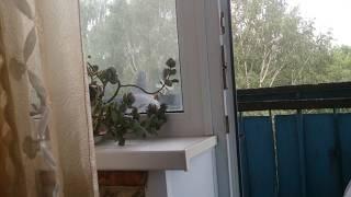 Голубь заглядывает через балкон в комнату