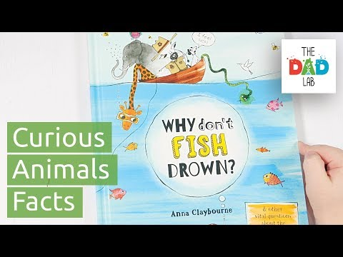 Why Don't Fish Drown? – Children's Book Review