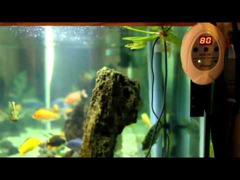Finnex Max-300 Digital Aquarium Heater Controller Review