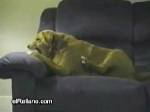 10 khoảnh khắc điên rồ nhất của động vật - xem mà không nhịn được cười =]