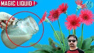 SECRET LIQUID FERTILIZER | See What Happens When You Use This Organic Fertilizer